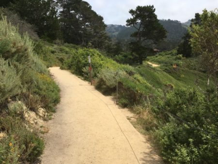 Point Lobos State Reserve Bird Island Trail