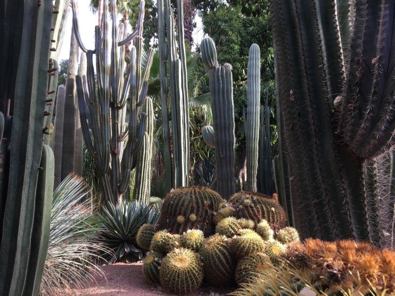 Cactus collection in the Majorelle Gardens