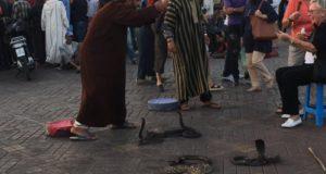 Jemaa el-Fna snake charmer