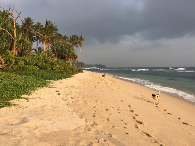 Ahangama Beach, Sri Lanka's South Coast