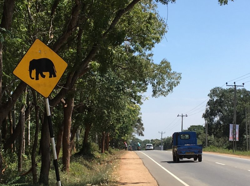 Elephant road sign, Sri Lanka