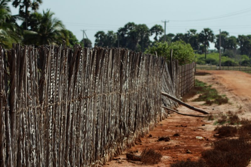 Kalpitiya road and cattle fence