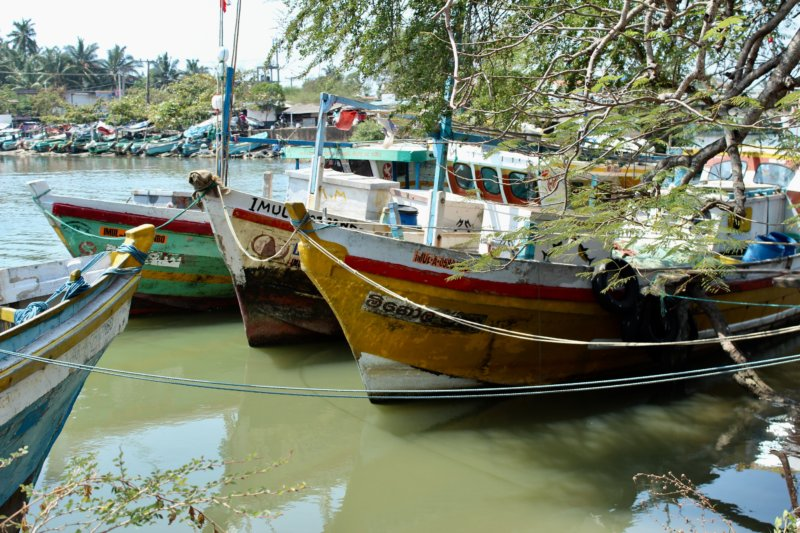 Negombo fishing boats
