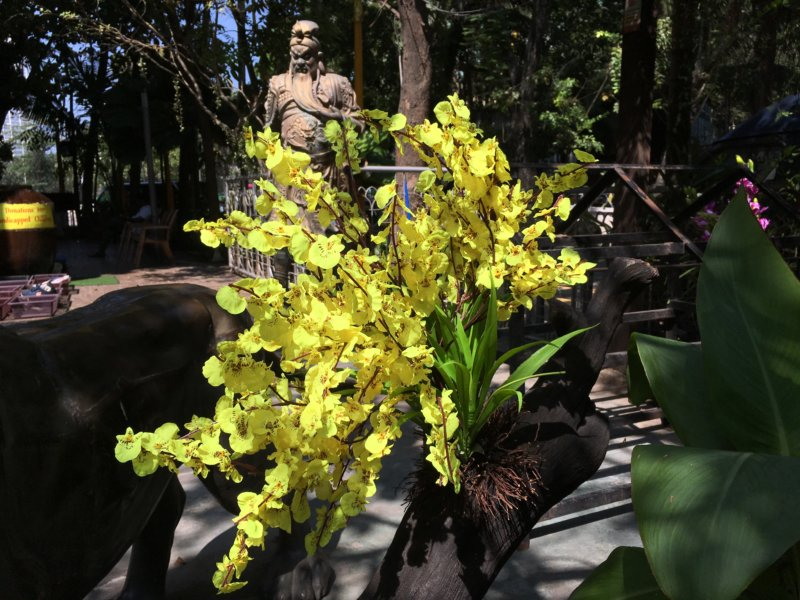 Temple flowers and statue, Colombo