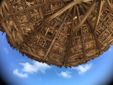 Coconut sunshade
