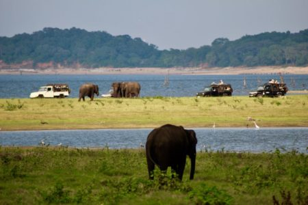 Kaudulla National Park elephants and jeeps