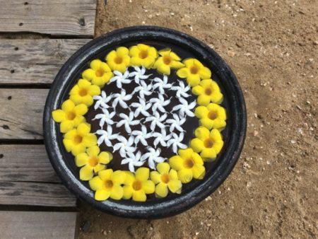 Maalu Maalu Resort flowers