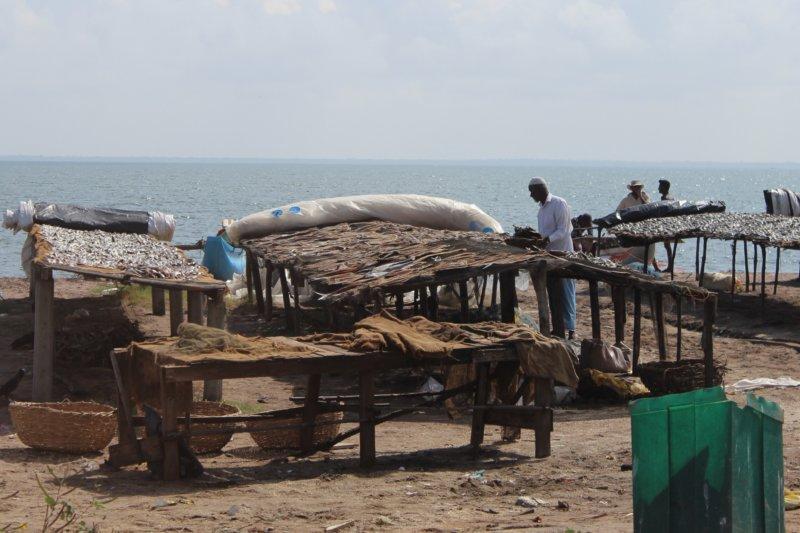 Sri Lanka East Coast fish drying
