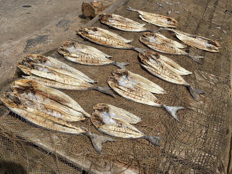 Sri Lanka East Coast salted fish drying