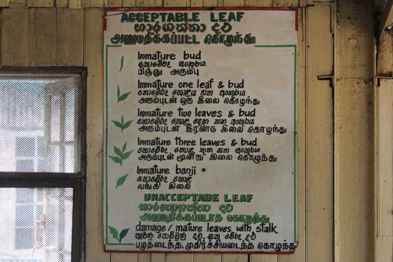 Acceptable leaf, Nuwara Eliya tea factory