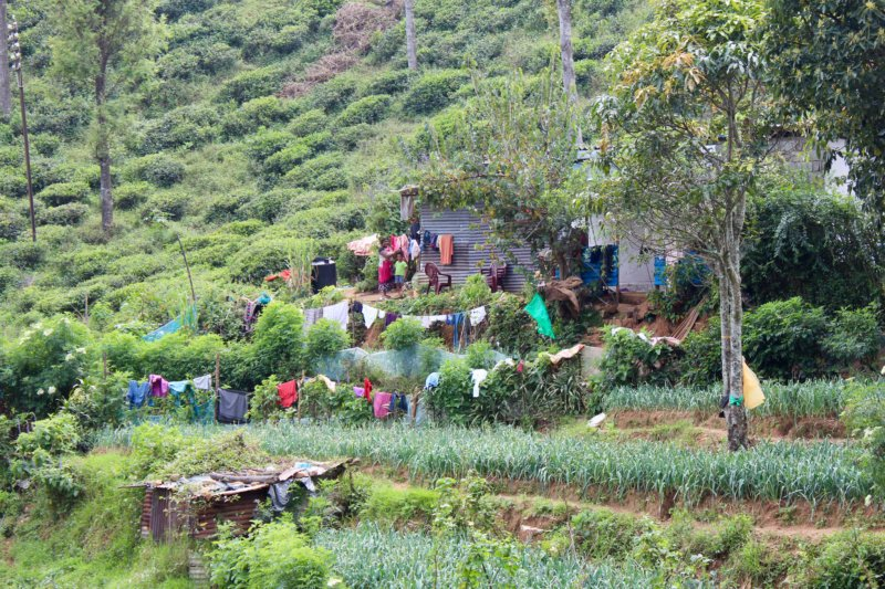 Tea picker's home, from Kandy to Nuwara Eliya