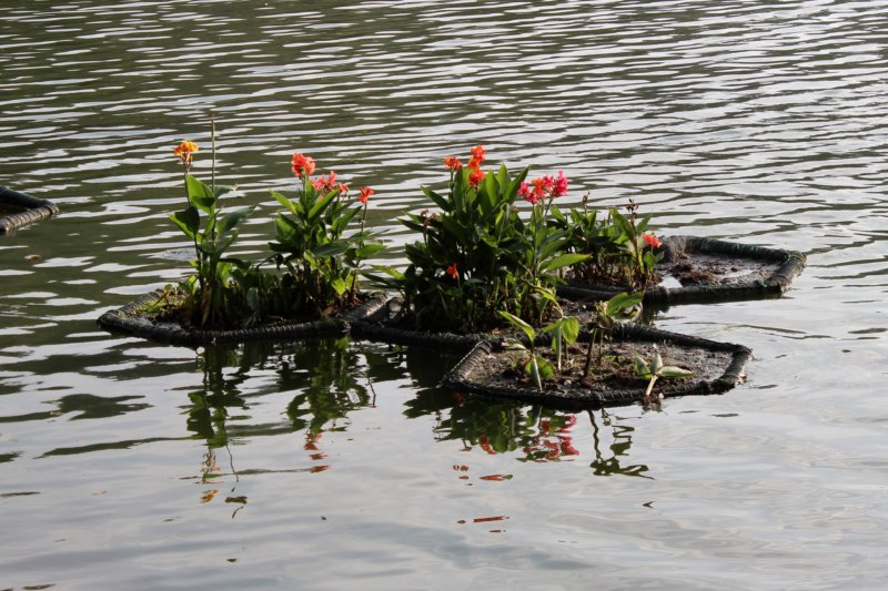 Flowers on Kandy Lake