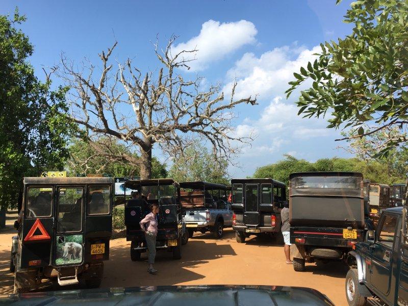 Jeep safaris to Yala National Park
