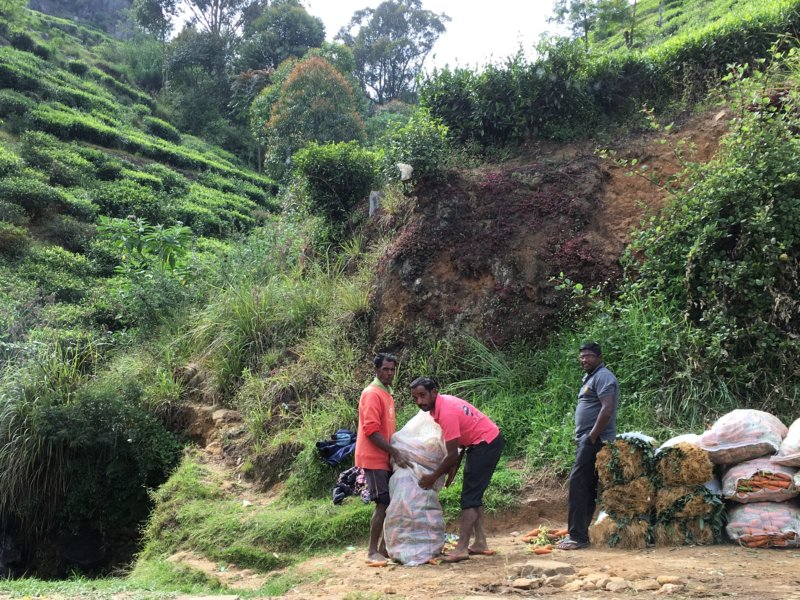 Packing vegetables, from Kandy to Nuwara Eliya