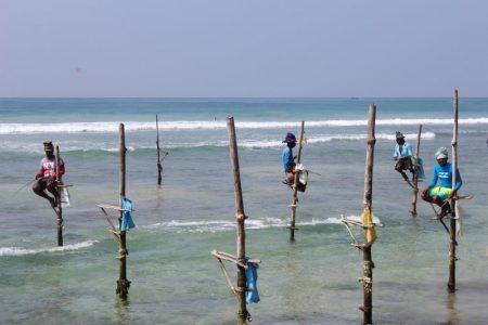 Sri Lanka's South Coast stilt fishing