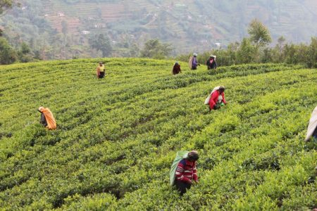 Kandy to Nuwara Eliya: Sri Lanka's Tea Country