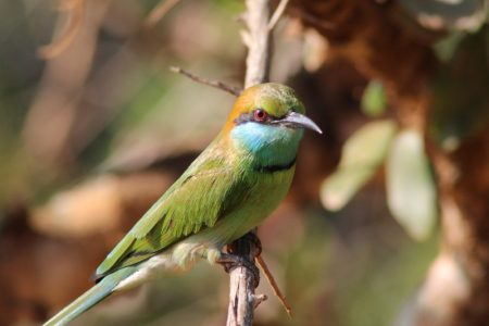 Yala National Park birdlife