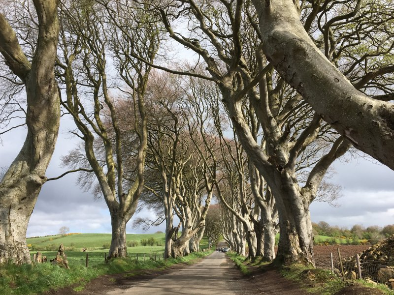 The Dark Hedges, Giant's Causeway day trip