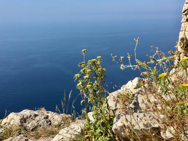 Mallorca west coast cliff flowers