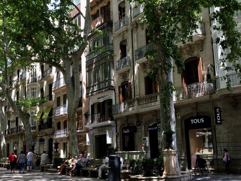 Shady avenue ofPasseig des Born, Palma de Mallorca