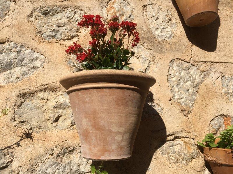 Flower pot on the stony wall, Estellencs