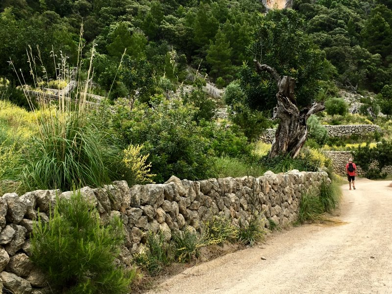 Beautiful Mallorca: hiking in Serra de Tramuntana