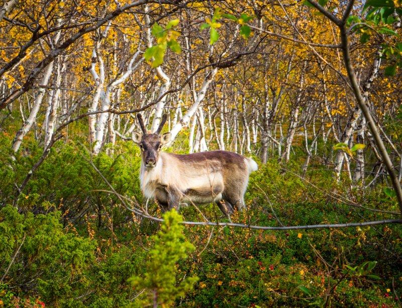 Santa's reindeer?