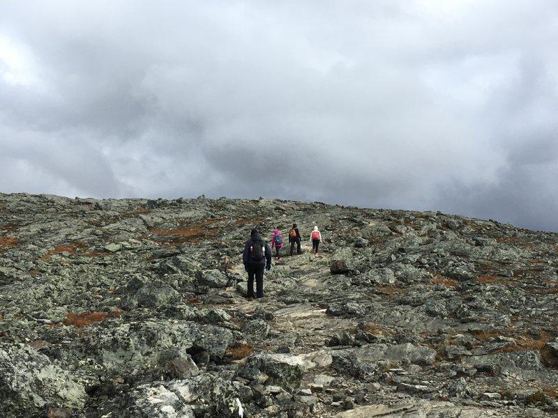 Hike to Saana fell: reaching the top