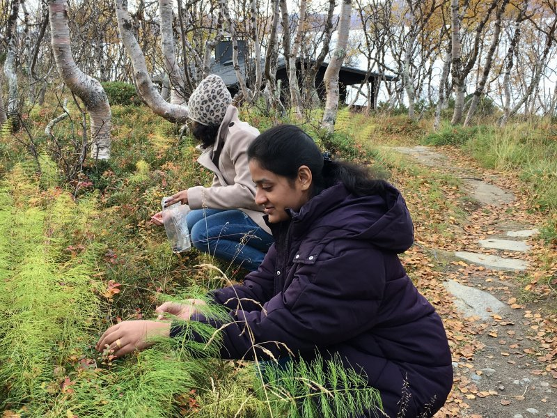Indian public health students picking lingonberries