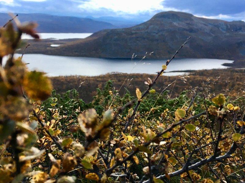 Arctic nature, important for the Sámi people