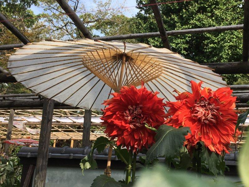 Ueno Park Autumn Dahlia Garden