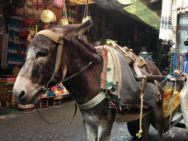 A lonely donkey in the souks of Marrakech