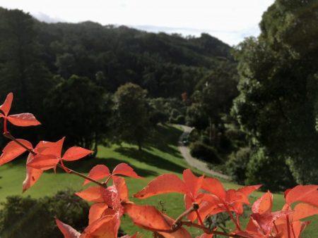 Green hills of Sintra