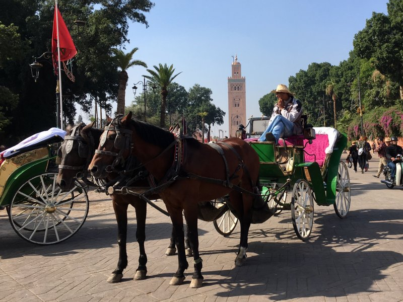 Man, horse and carriage, Jemaa el-Fna