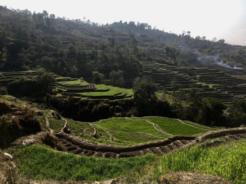Hiking along Nagarkot rice terraces, Nepal