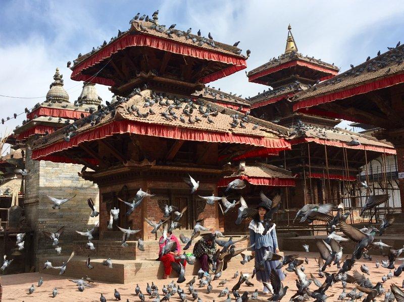 Kathmandu Durbar Square pigeons, Nepal