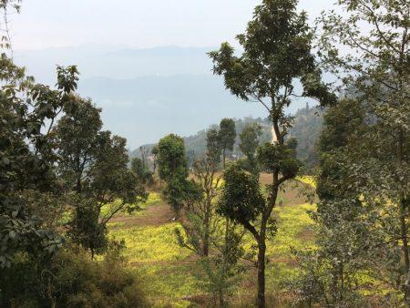 Sarangkot nature