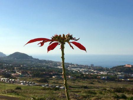 Atlantic Ocean from La Orotava, Tenerife