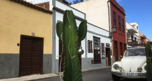 Garachico street and cactus