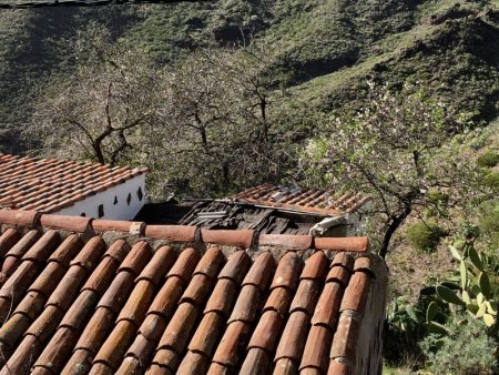Masca roofs and fruit trees, Tenerife
