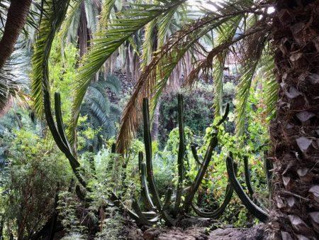 Parque del Drago, Icod de los Vinos, Tenerife