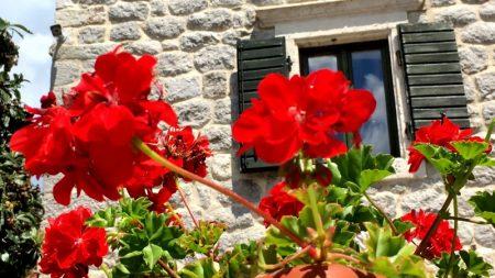 Montenegro flowers