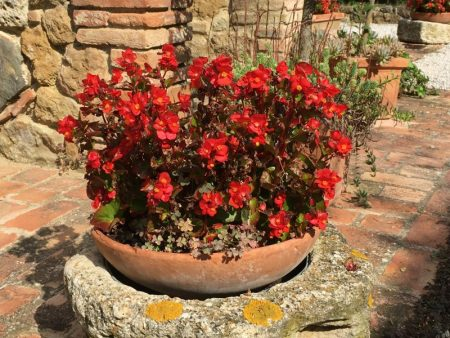 Italy by train and car: agriturismo flowers