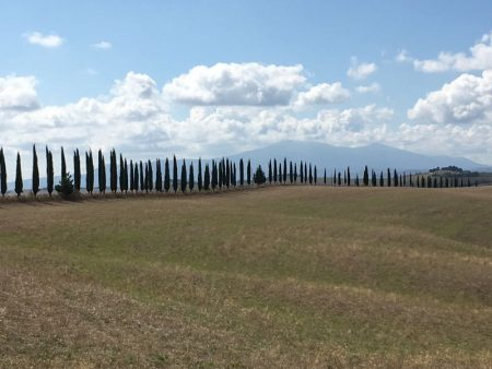 Italy by train and car: Crete Senesi cypress row