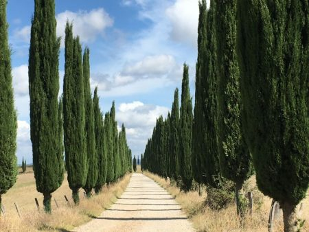 Italy by train and car: Tuscany cypresses