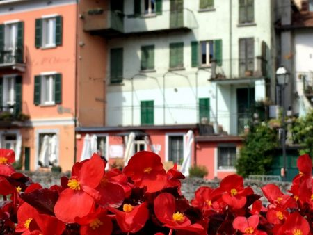 Flowers of Argegno, Lake Como